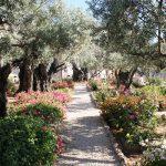Garden_of_Gethsemane